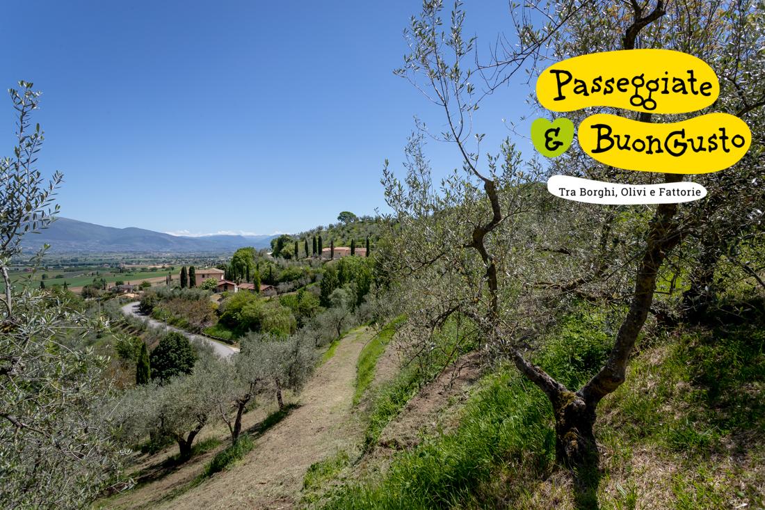 Passeggiate & Buon Gusto – Sabato 10 Luglio 2021, Bettona (Pg) Frantoio Mannelli Giulio