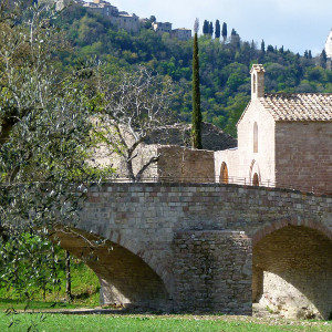 1601_bosco-di-san-francesco