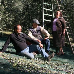 olivetobox