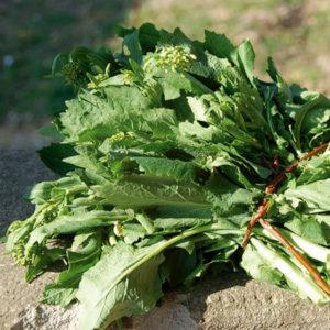 broccoletti del trasimeno1
