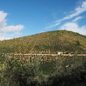 LA FASCIA OLIVATA ASSISI – SPOLETO DIVENTA PATRIMONIO AGRICOLO DI RILEVANZA MONDIALE DELLA FAO