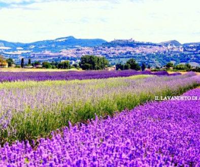 Assisi(6)